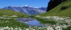 Альпы Швейцарии - фото