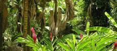 Растения Сейшел