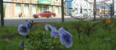 Празднование Дня города в Иваново