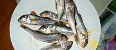 Барабулька - рыба Черного моря