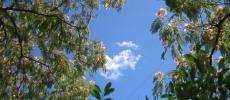 Небо - Никитский ботанический сад