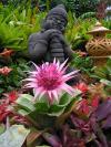 Сад Орхидей на Бали - орхидеи здесь растут очень хорошо