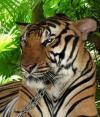 Зоопарк в Пхукете