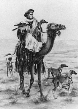 Соколиная охота в ОАЭ очень популярна
