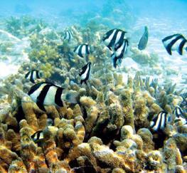 Дайвинг места на Бали
