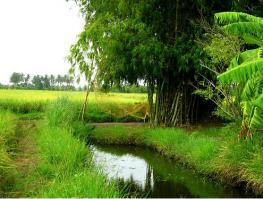 Перлис - самый маленький штат Малайзии