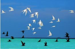 Растительный и животный мир Мальдив
