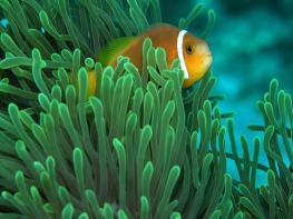Рыбалка на Мальдивах захватывает
