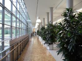 Университетская клиника г. Хайдельберг