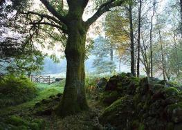Растительный и животный мир Великобритании
