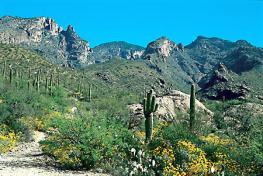 Курорт Тусон - Tucson - для лечения различных форм туберкулеза