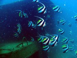 Дайвинг на острове Хайнань - Diving Hainan