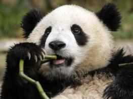 Развлечения в Китае: чем себя развлечь?