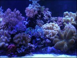 Сочинский аквариум-террариум