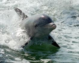 Дельфинарий АкваМир