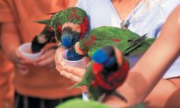 Парк птиц на Волчьих воротах