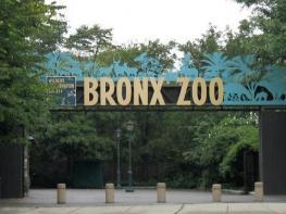 Зоопарк Bronx Zoo