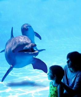 Аквапарк-зоопарк Marineland
