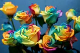 Мальта: выставка цветов