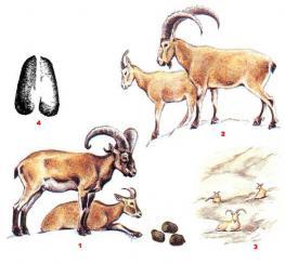 Особенности Азербайджанской охоты