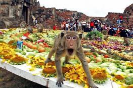 Обезьяний банкет (Monkey Buffet) в провинции Лопбури
