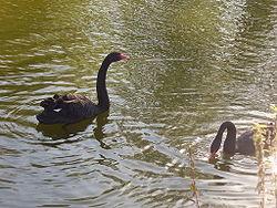 Парк флоры и фауны «Роев ручей» - зоопарк