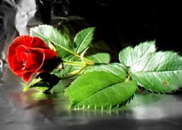 21 мая в Болгарии Фестиваль Розы