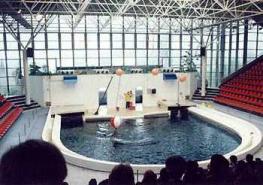 Аквариум и дельфинарий в Варне: добро пожаловать!
