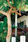 Отель  Ao Phrao Resort