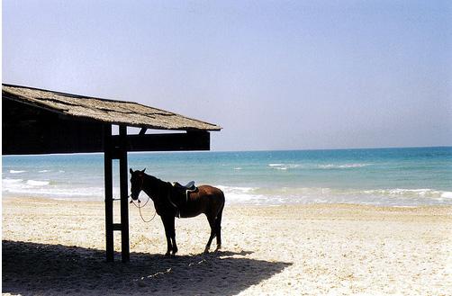 Курорт в Израиле - Эйлат - побережье - фото flickr.com