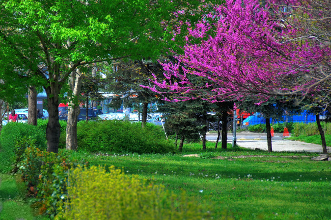 Пловдив - улицы города - фото