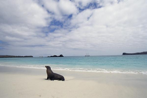 Галапагосские острова - пляж - фото