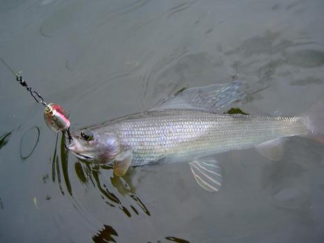 Камчатка - рыбалка - фото