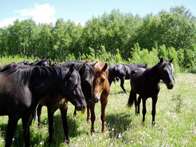 Езда на лошадях - фото