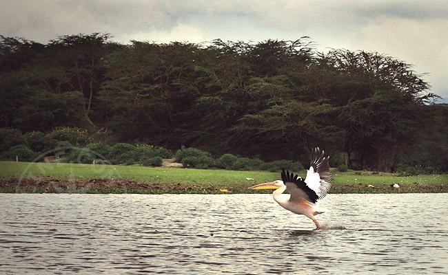 Наиваша - озеро в Кении