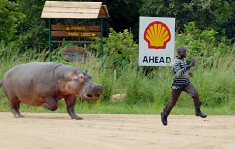 Эх, не легкая это работа... убегать от бегемота