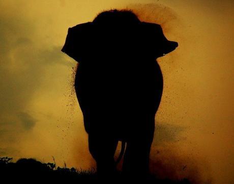 Гдето в Африке :)