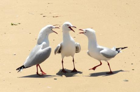 Птицы как люди :)