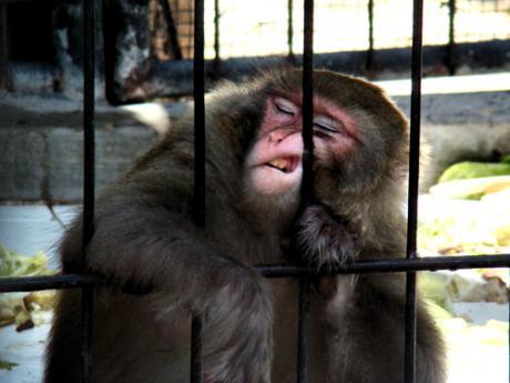 Дубайский зоопарк..тихий час