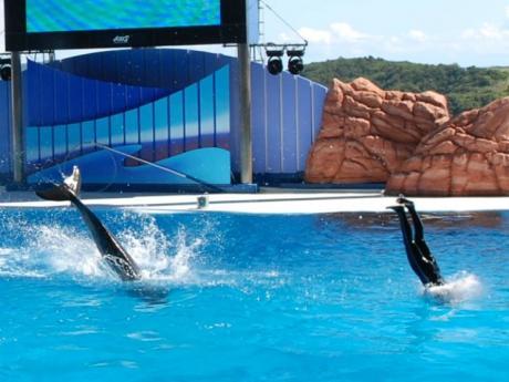 Синхронное плавание :)