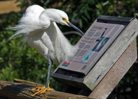 Птице очень интересно - что же о ней написали :)