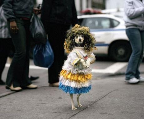 Прикольная собачка :) ... уличное фото