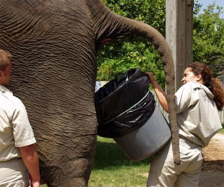 Интересно что будет с ней  если слон захочет П....