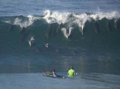 Дельфины тоже любят серфинг :)