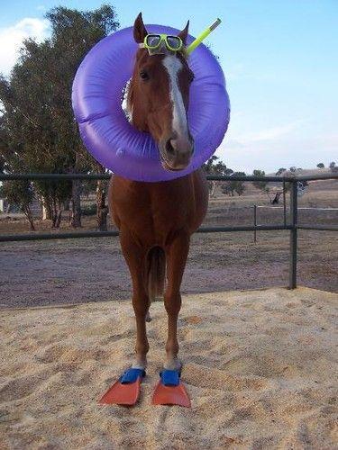 Лошадь на отдыхе ! :)