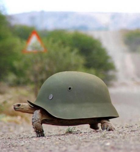 Прикольная черепаха :)