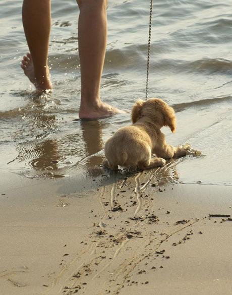 Пора купаться :)