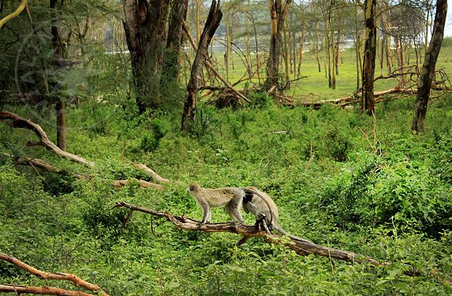 Парки и заповедники в Кении