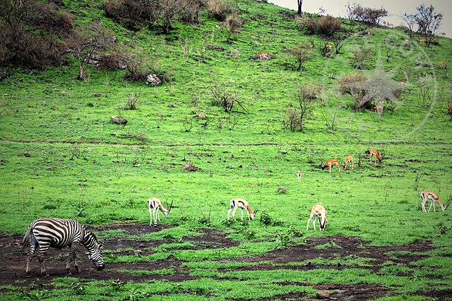 Природа Кении - фото