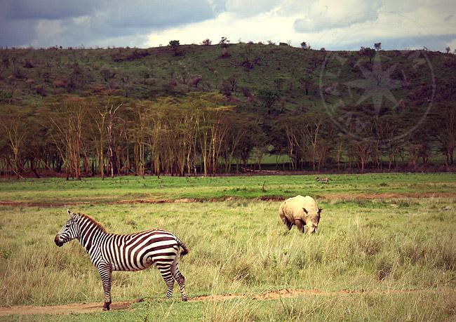 Растительный и животный мир Кении